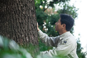 樹木医のイメージ画像
