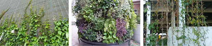 壁面緑化のイメージ画像
