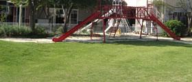 校庭・園庭の芝生化