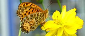 生物多様性に配慮した緑化