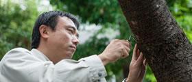 樹木医による樹木診断