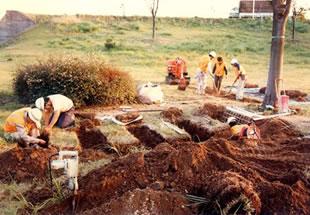 土壌の大島の画像