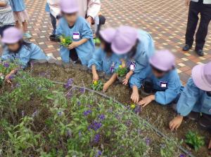 20161102東郷花植替え写真2